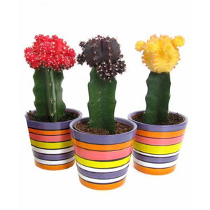 collection-3-CACTUS